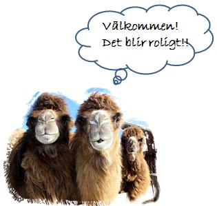 Kameler Rolf Grönroos